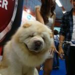 Cute dog cute girl