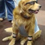 Mister cool dog