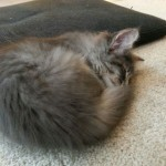 Little kitten is sleeping